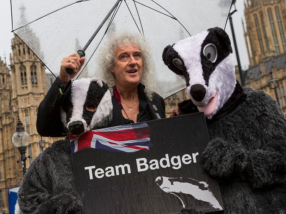 Brian May badgers - Getty
